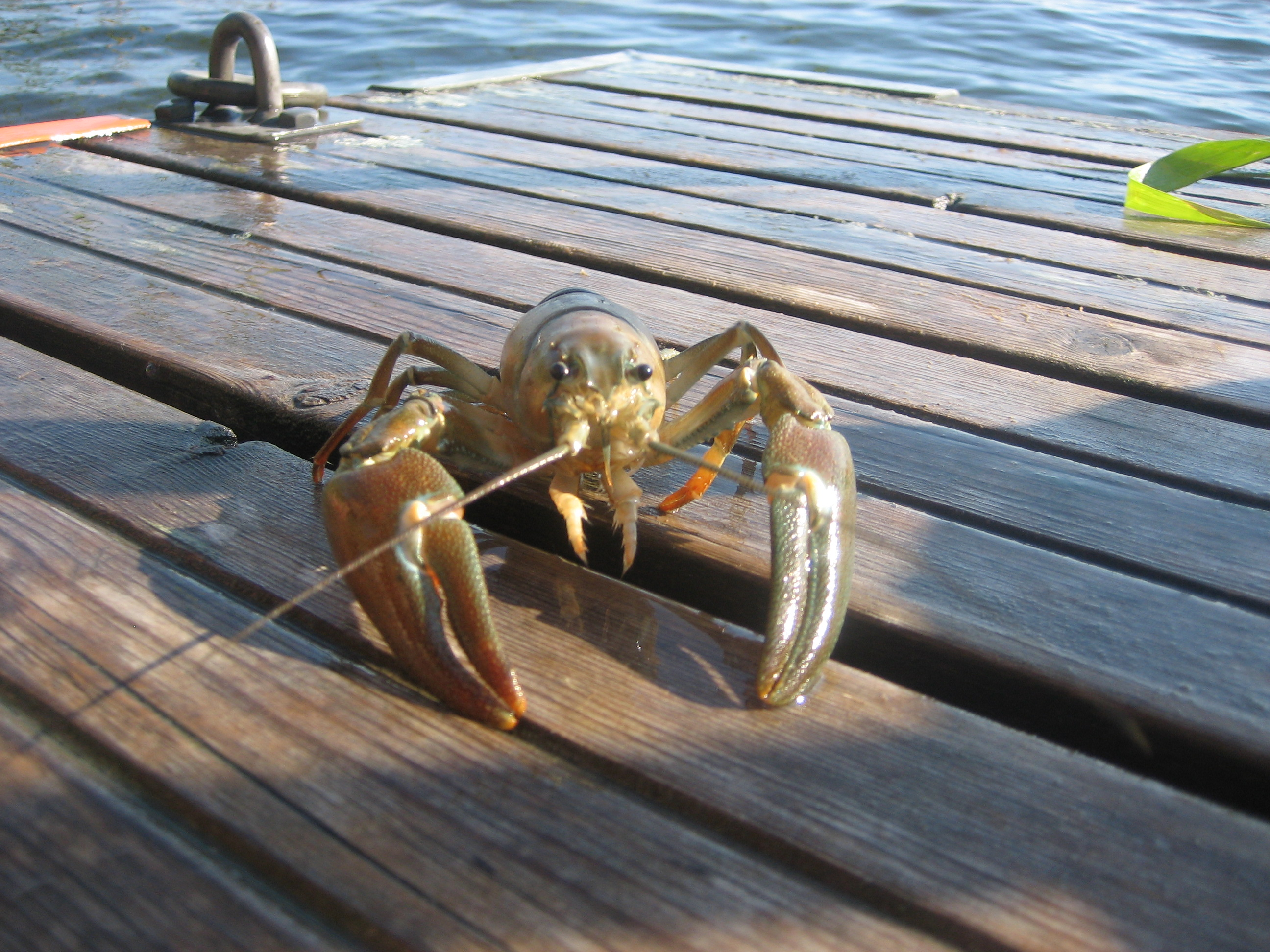 crayfish fishing from sweden with love